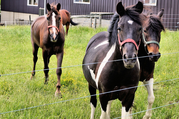 Update: U.S. Horse Slaughter on Hold…for Now