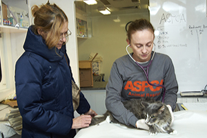ASPCA veterinarian in the field cares for cat