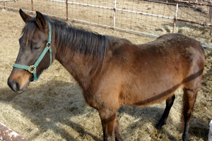 U.S. Senate Committee to Horse Slaughterers: You're Not Welcome Here