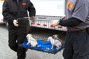 ASPCA Responders carrying crate