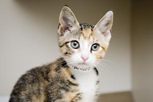close up of cute kitten