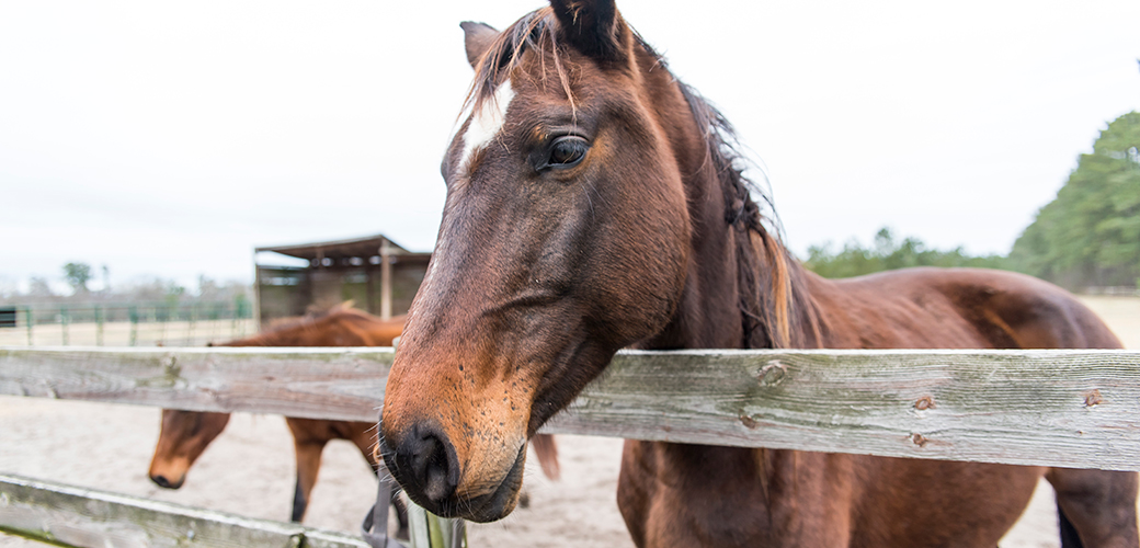 Why horses need our help