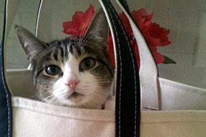Cat sitting in tote bag
