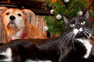 Dog and cat sitting by Christmas tree