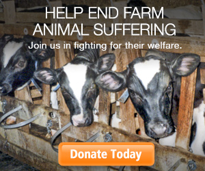 Help End Farm Animal Suffering