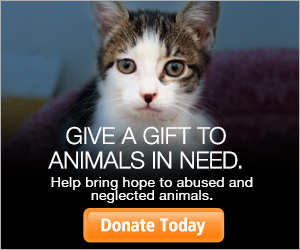 Give a gift to animals in need.