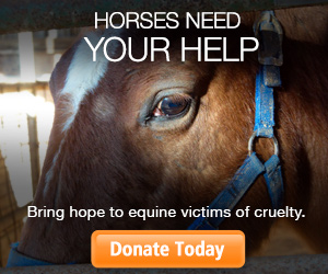 Horses Need Your Help