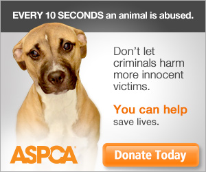 Every 10 seconds an animal is abused.
