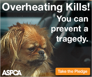 URGENT: Pledge To Save Lives This Summer