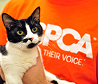Join Team ASPCA - Adoptable Cats Ad