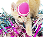 Donate Your Birthday - Adoptable Cats Ad
