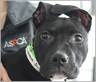 Join Team ASPCA - Adoptable Dogs Ad