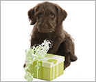 Donate Your Birthday - Adoptable Dogs Ad