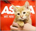 Join Team ASPCA - Blog Ad