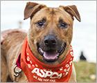 Join Team ASPCA - Dog Care Behavior Ad