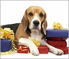 Donate Your Birthday - Dog Care Behavior Ad