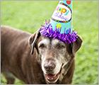 Donate Your Birthday - Fight Cruelty Ad
