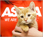 Join Team ASPCA - Parents Blog Ad
