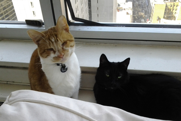 orange and white cat and black cat hanging out