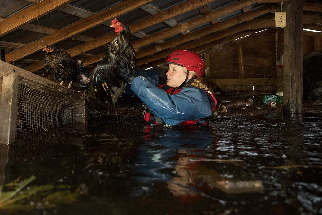 a responder rescuing a chicken