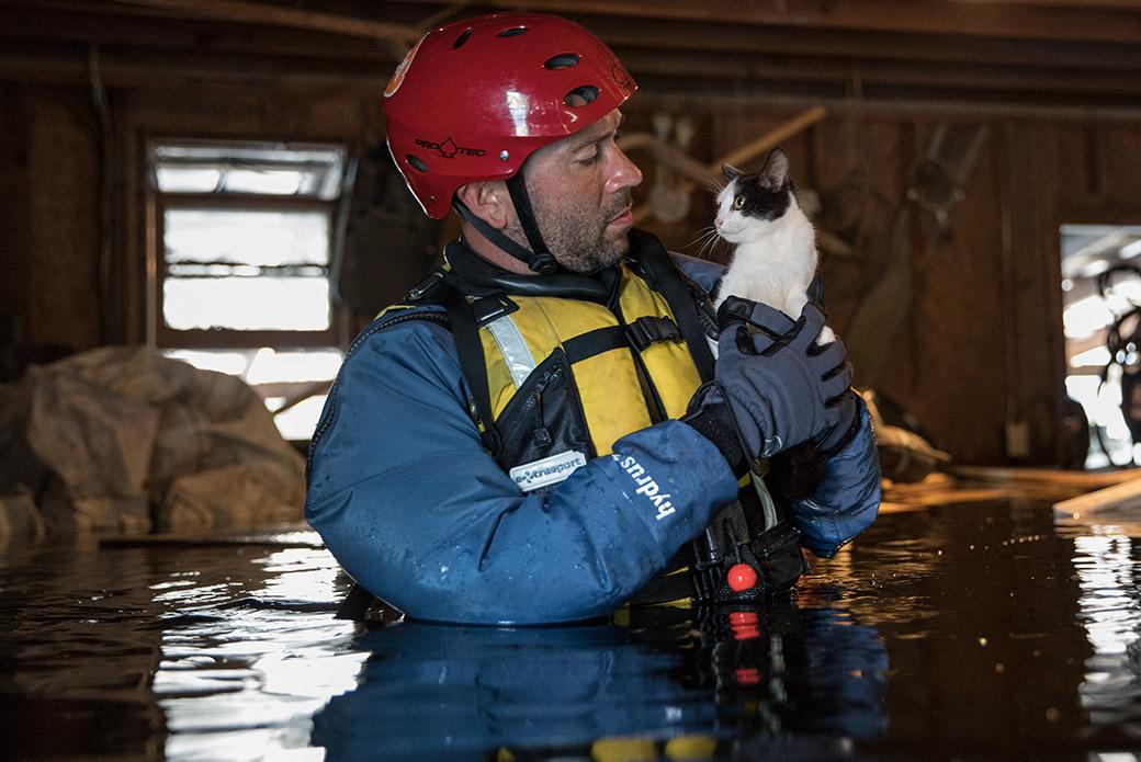 a responder rescuing a cat