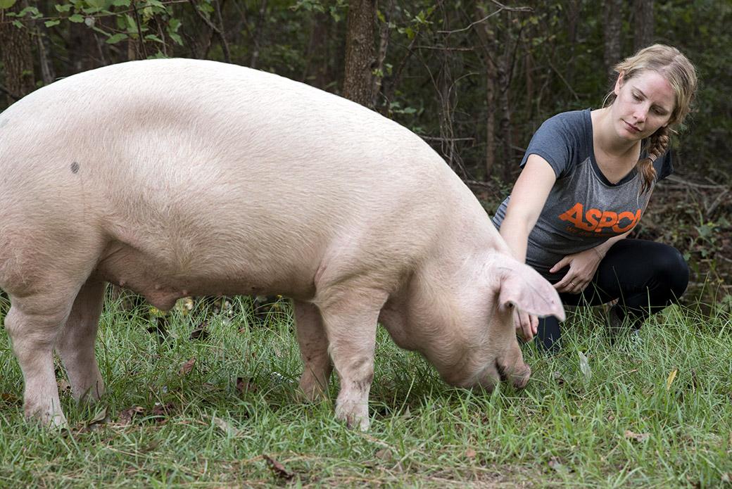 a responder with a pig