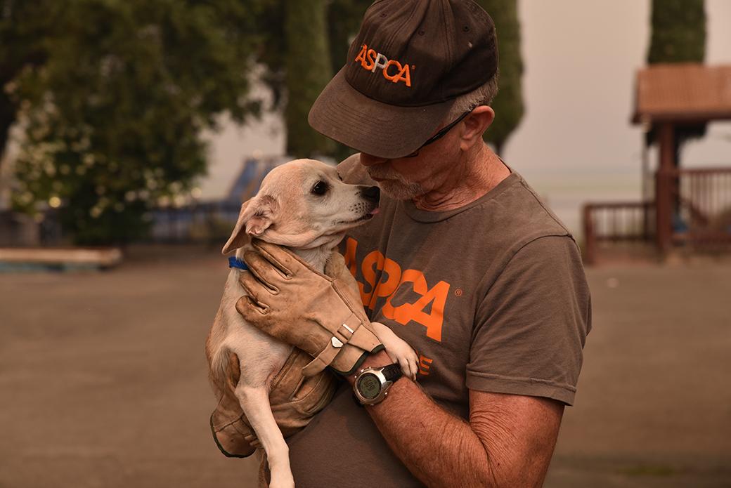 responder holding a dog