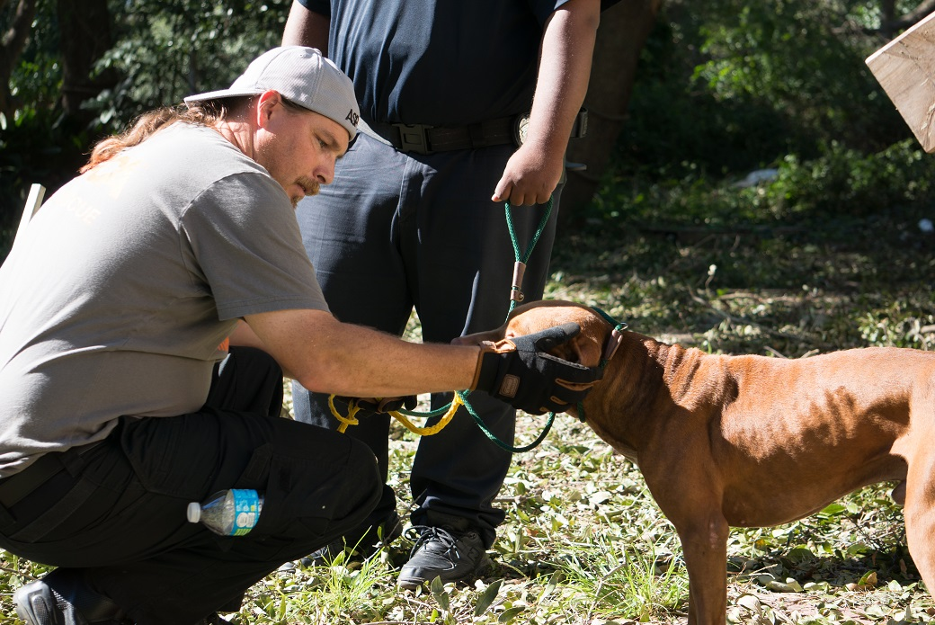 rescued dog being examined
