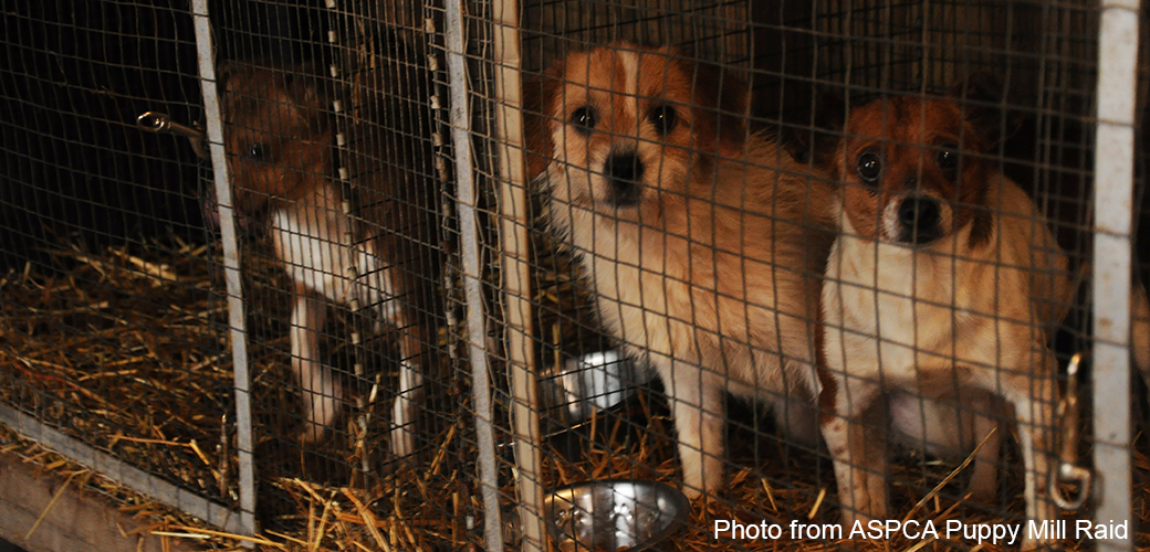 See for Yourself: USDA Photos Reveal Horrific Conditions for