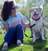 Happy pit bull sits next to ASPCA staffer