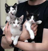 Three kittens being held