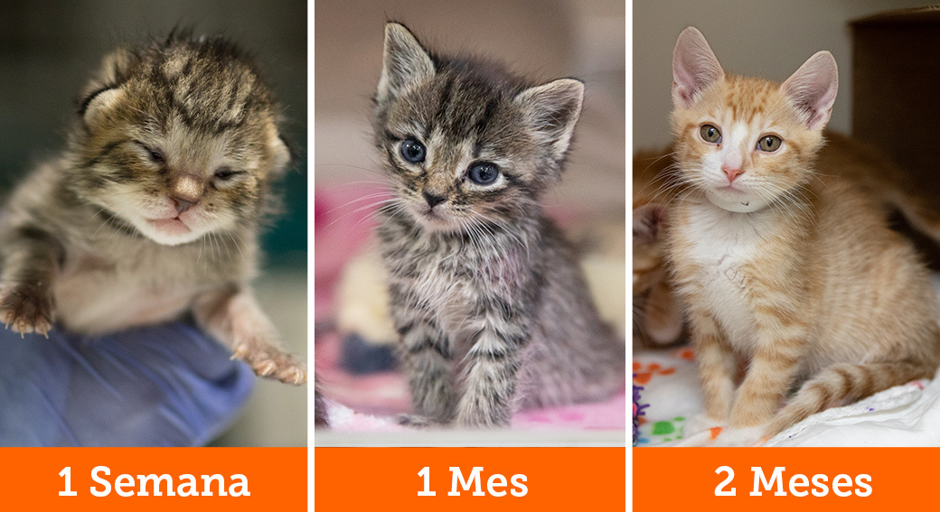 Kittens at different ages