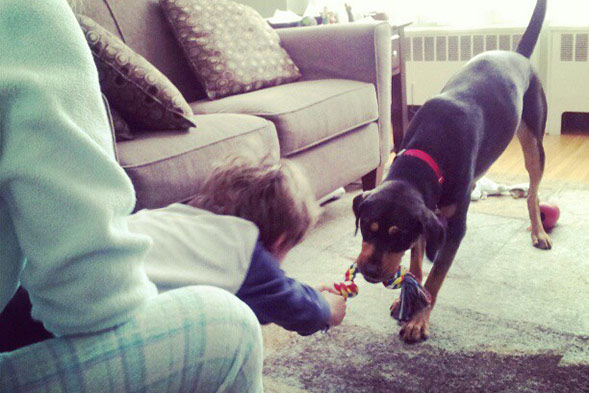 child playing tug of war with dog