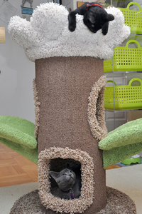 Two cats playing in cat tree