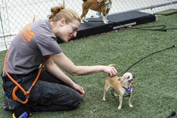ASPCA staff caring for puppy mill survivor