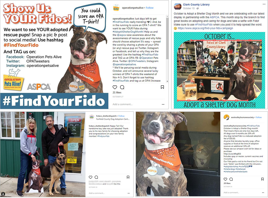 Find your fido social media collage