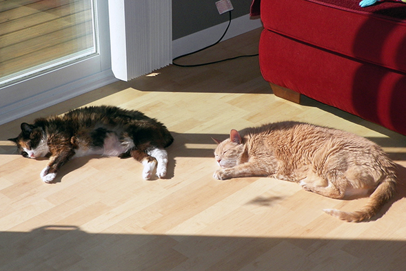 Two cats laying in sunlight