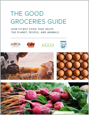 Good groceries guide
