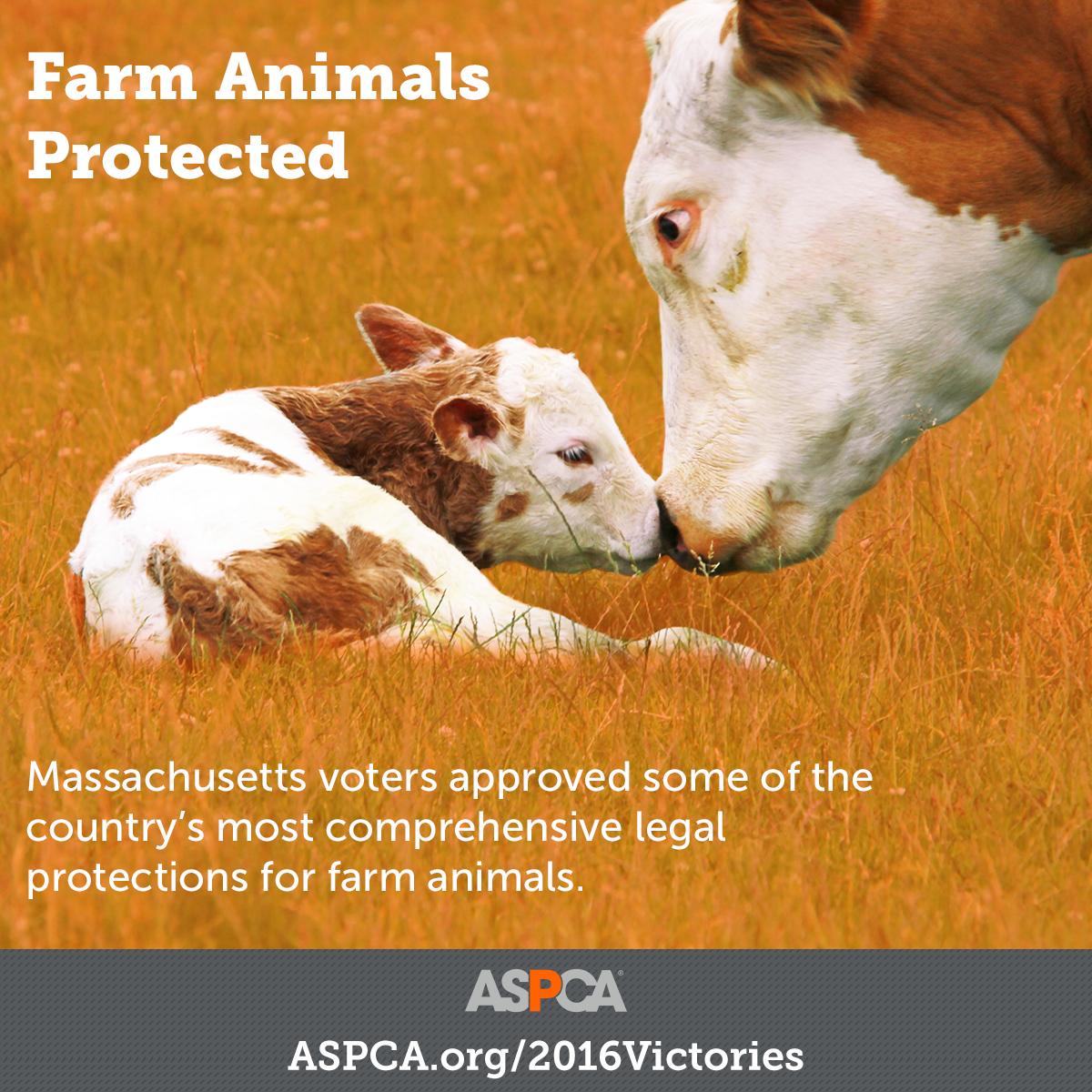 Farm Animal Protected
