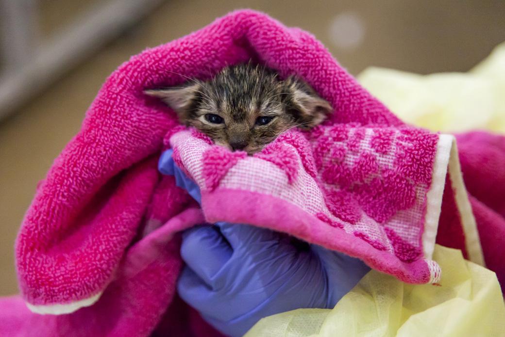kitten being held in a towel