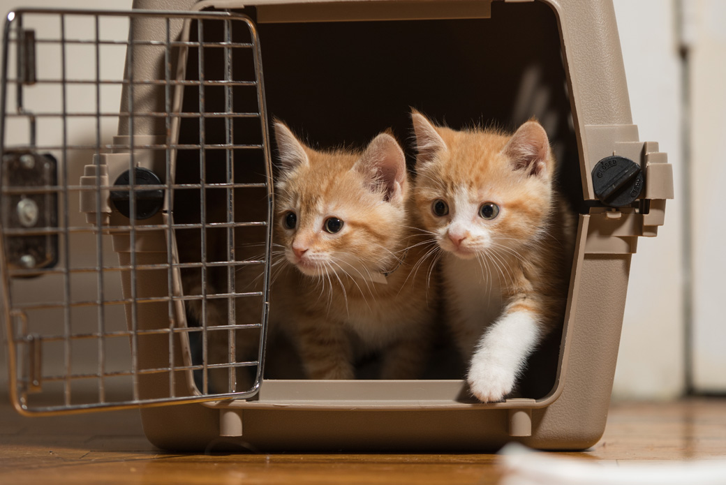two kittens in a carrier