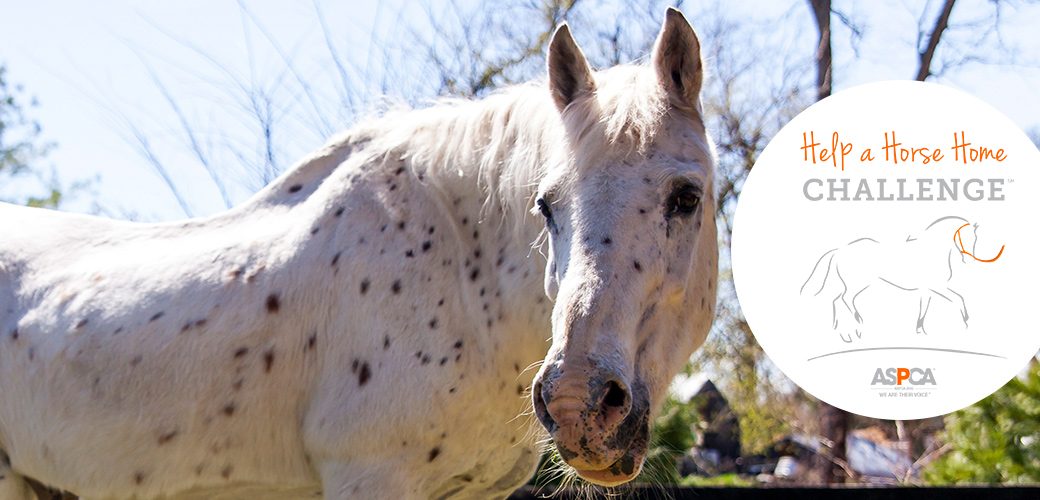 ASPCA Help a Horse Home
