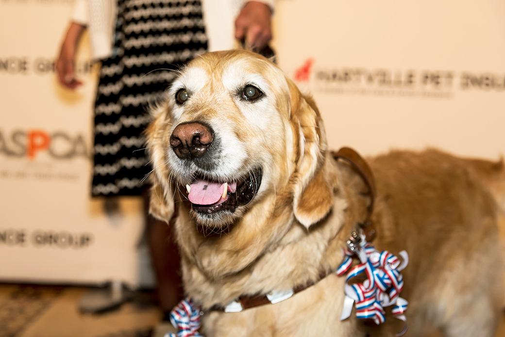 Do You Know a Heroic Pet, or a Person Who Has Made a Big Difference for Animals? The ASPCA Wants to Hear from You!
