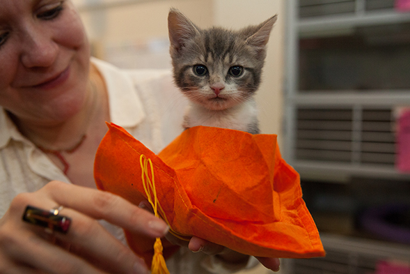 "Happy Graduation Day: ASPCA Hosts ""Kittergarten"" Commencement"