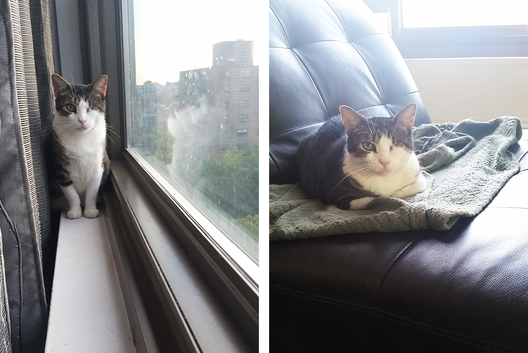 Left: Charlotte on a windowsill, Right: Charlotte on the couch