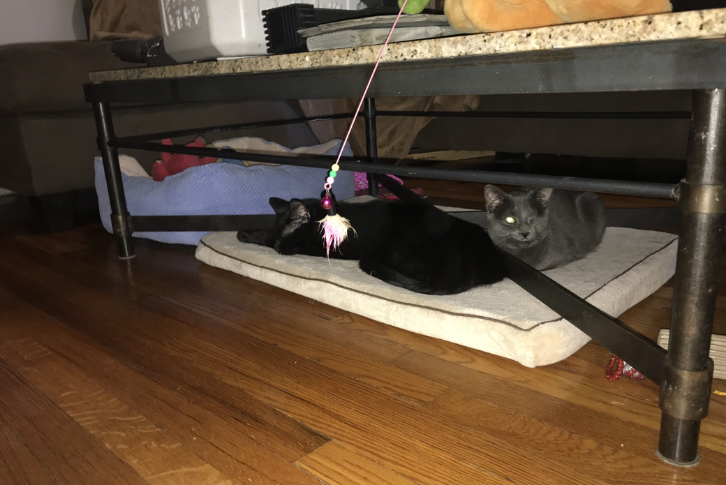 Rosie and Casper under a table