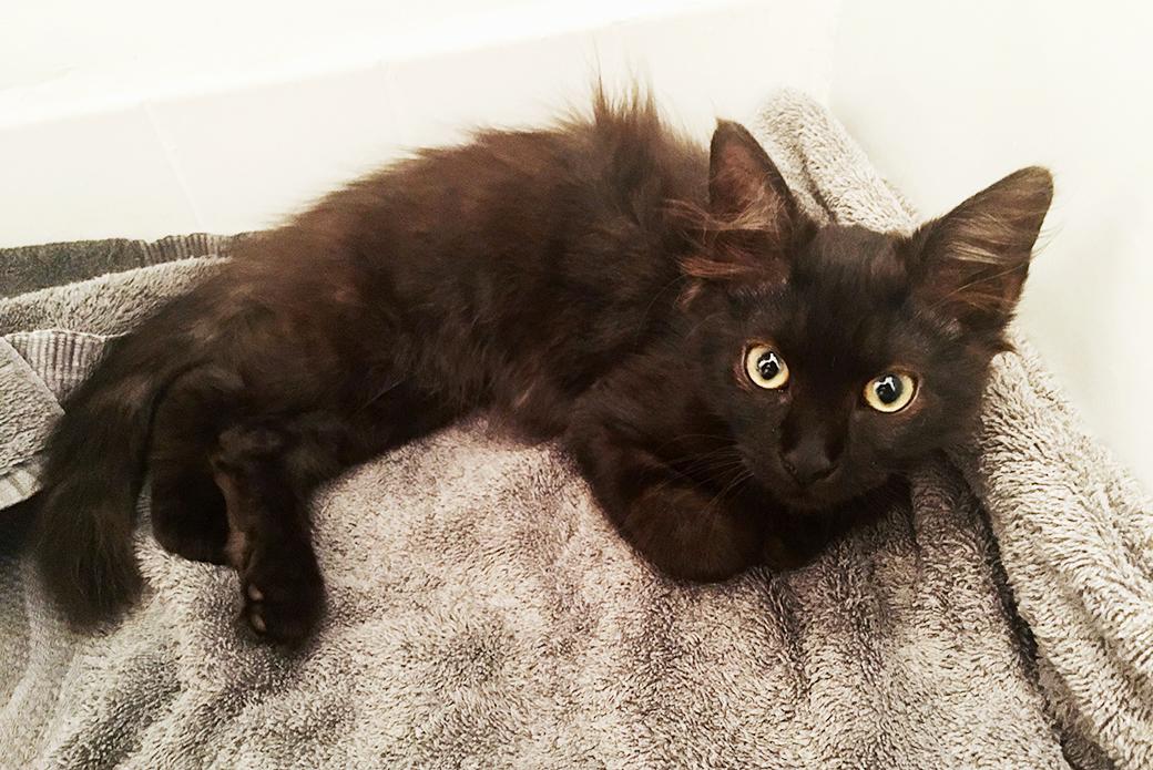 Irvin as a kitten