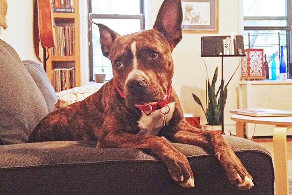 ASPCA Happy Tails: Sweet Bea