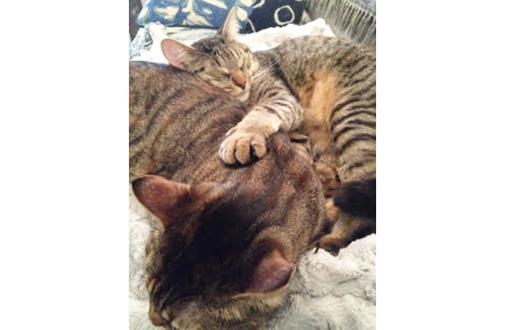 Feline Siblings Stick Together