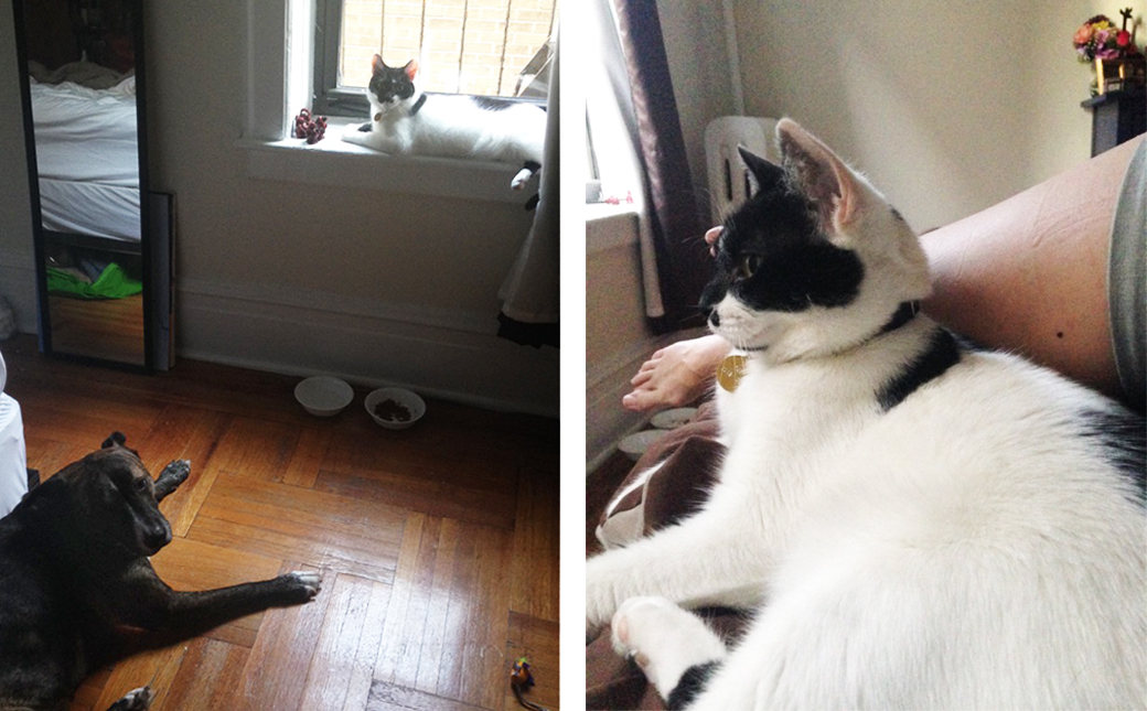 ASPCA Happy Tails: Rescued from Hoarding, Cate the Cat Found the Home of her Dreams